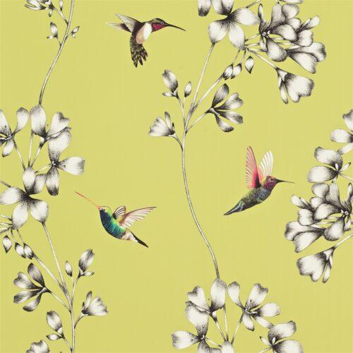 Amazilia hummingbird wallpaper - Gooseberry