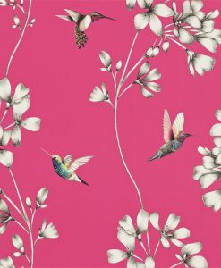 Amazilia hummingbird wallpaper - Flamingo