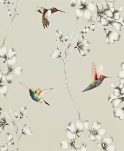 Amazilia hummingbird wallpaper - Silver