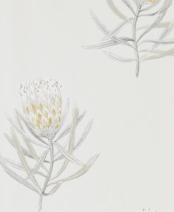 Protea Flower Wallpaper from The Art of the Garden Collection in Daffodil & Natural