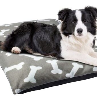 Dog bed from Catch of the Day