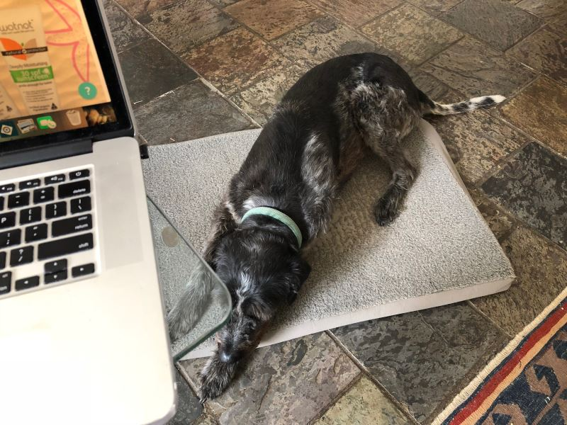 Home Office Must Haves - the pooch!