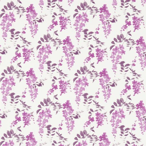 Wisteria Blossom Wallpaper