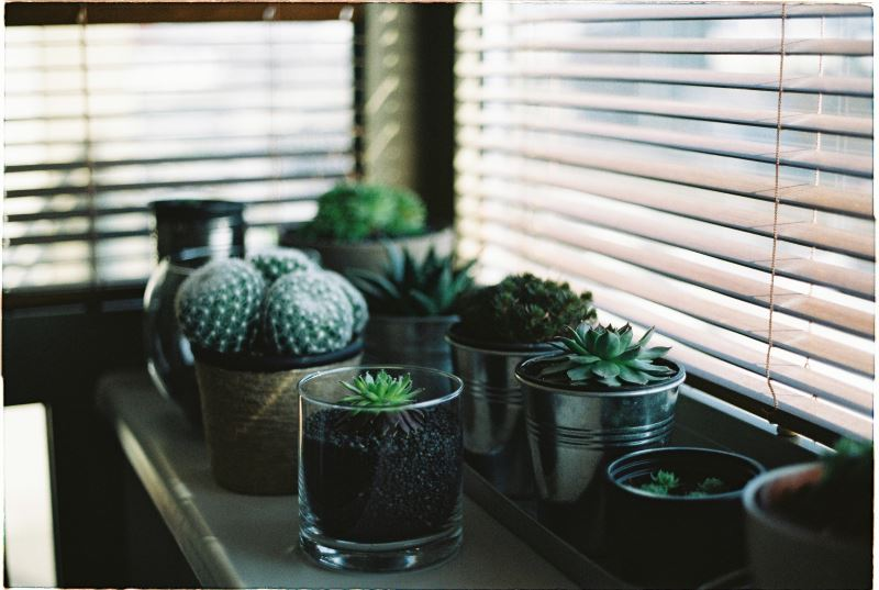 succulents and blinds